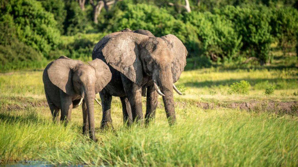 Botswana and Zimbabwe relax hunting laws
