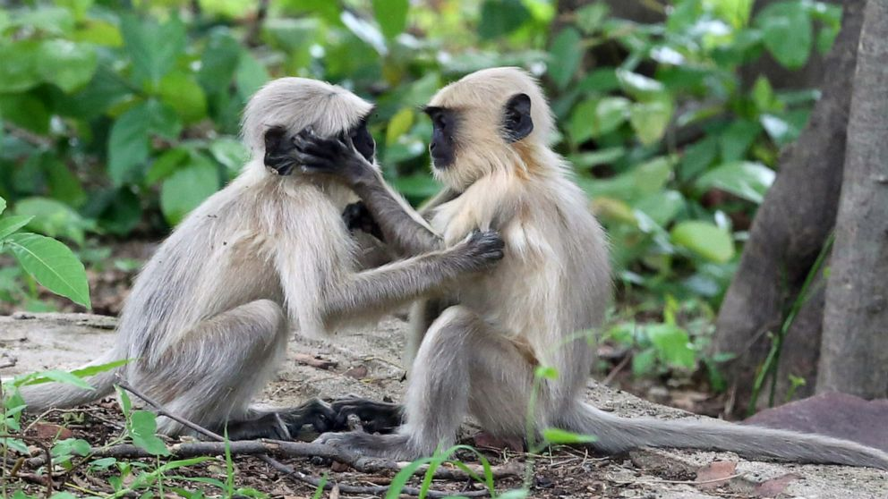 Monkeys, baseball and swimming: World in Photos
