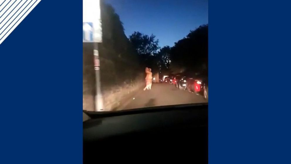 T. rex leads police on hilarious chase in England