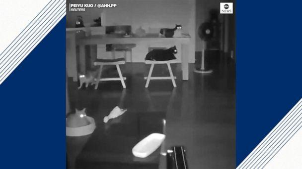 Earthquake awakens sleeping cats
