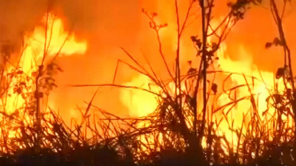 Fires in Amazon rainforest up by 84%