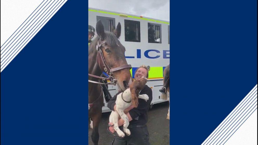 Scottish police horse gives dog a nuzzle