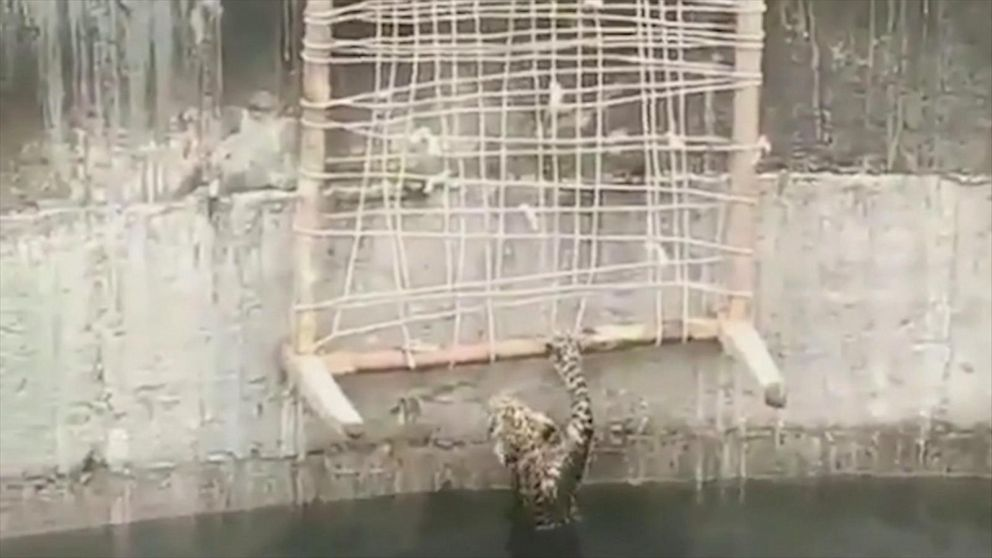 Rescue team helps leopard escape well in India