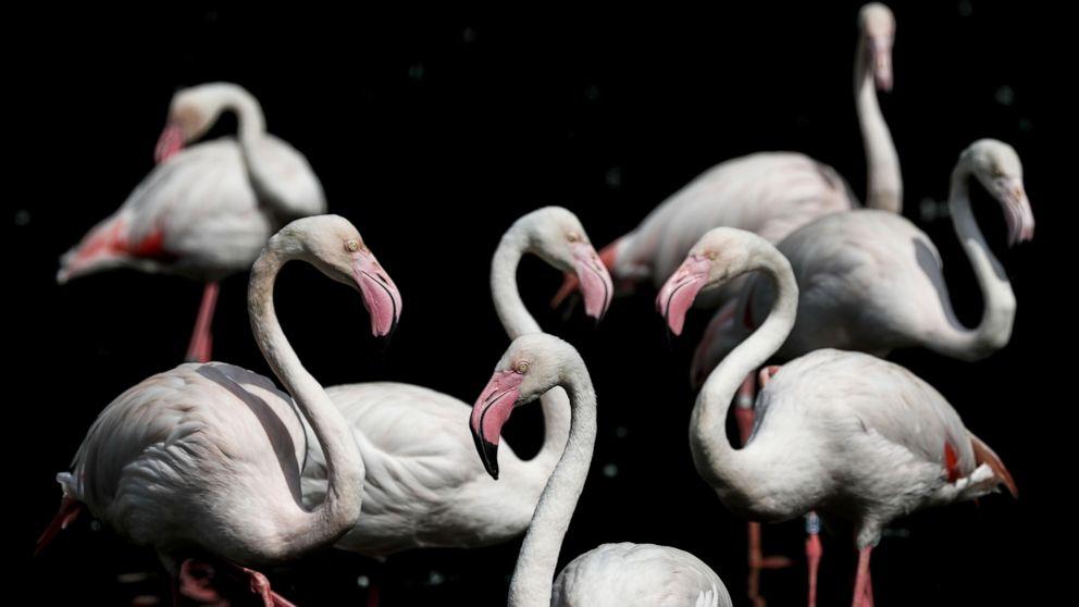 Flamingos, Pope Francis and California fire: World in Photos, Nov. 27