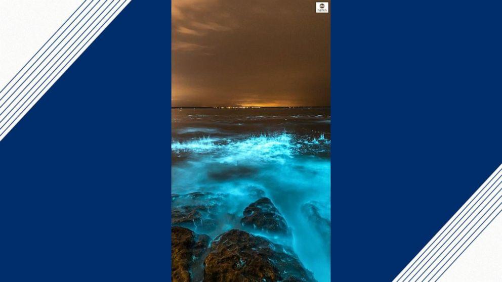 Otherworldly bioluminescent algae makes ocean glow bright blue