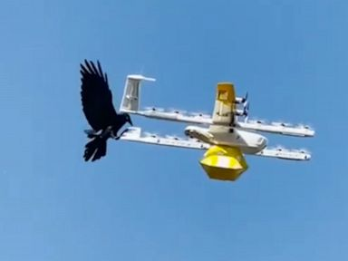 WATCH:  Raven attacks drone delivering coffee