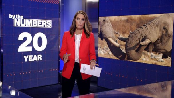 Video By the numbers: Ivory trade led to 'rapid evolution' of tuskless elephants