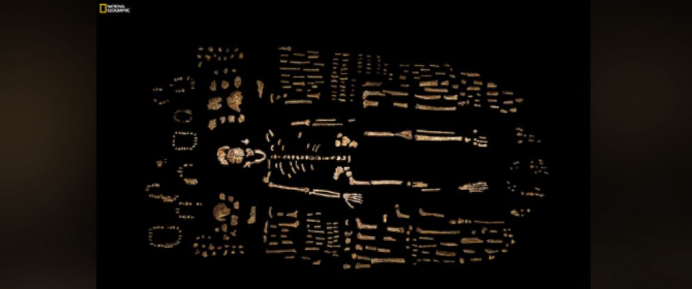 PHOTO: This photo provided by National Geographic from their October 2015 issue shows a composite skeleton of Homo naledi recovered from the Rising Star cave in South Africa.