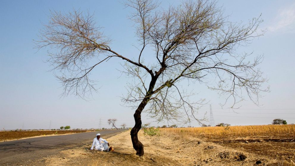 In this May 11, 2016, photo, an Indian farmer sits in the front of his destroyed crop of cotton, alongside a road in one of the drought affected region of Marathwada, in the Indian state of Maharashtra.