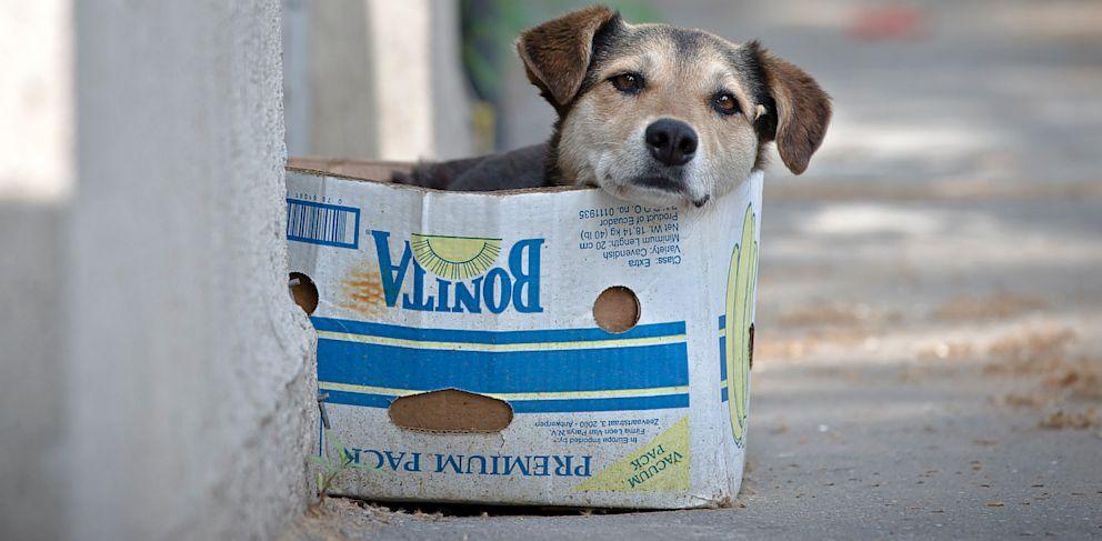 PHOTO: Romania To Euthanize Thousands of Stray Dogs