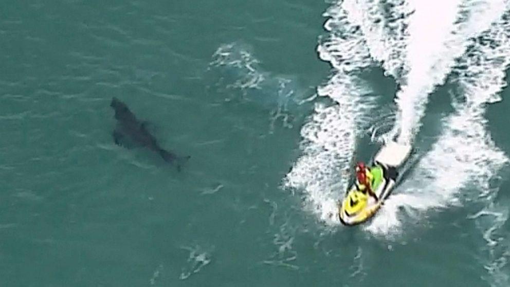 10-foot-long shark attacks, kills 60-year old surfer thumbnail