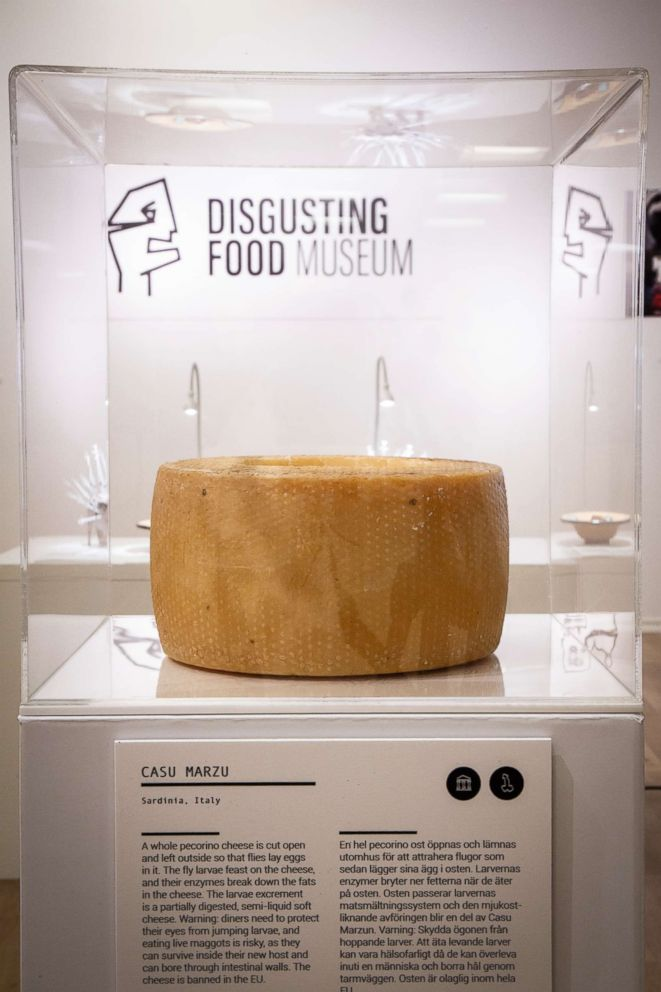 PHOTO: The Museum of Disgusting Food, which opened on Oct. 31, 2018, in Malmo, Sweden, featured casu marzu, a cheese from Sardinia, Italy, in which flies lay eggs.