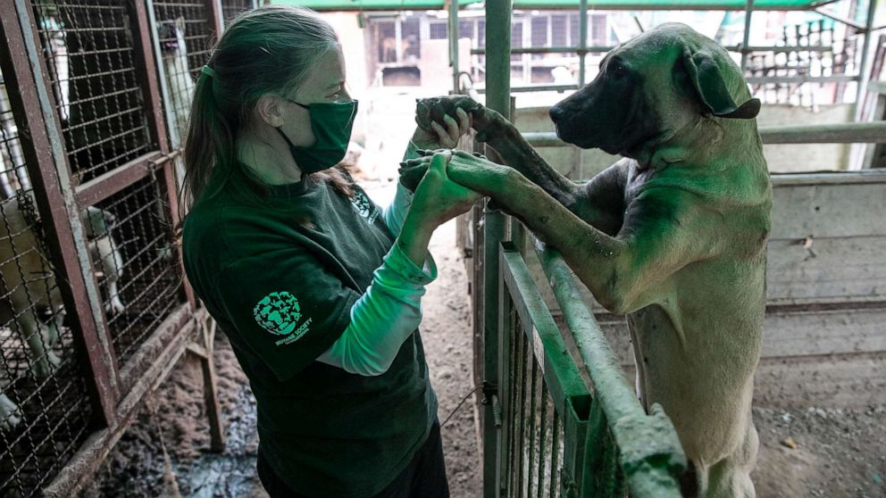 Almost 200 dogs rescued from South Korea dog meat farm land in US to find new homes