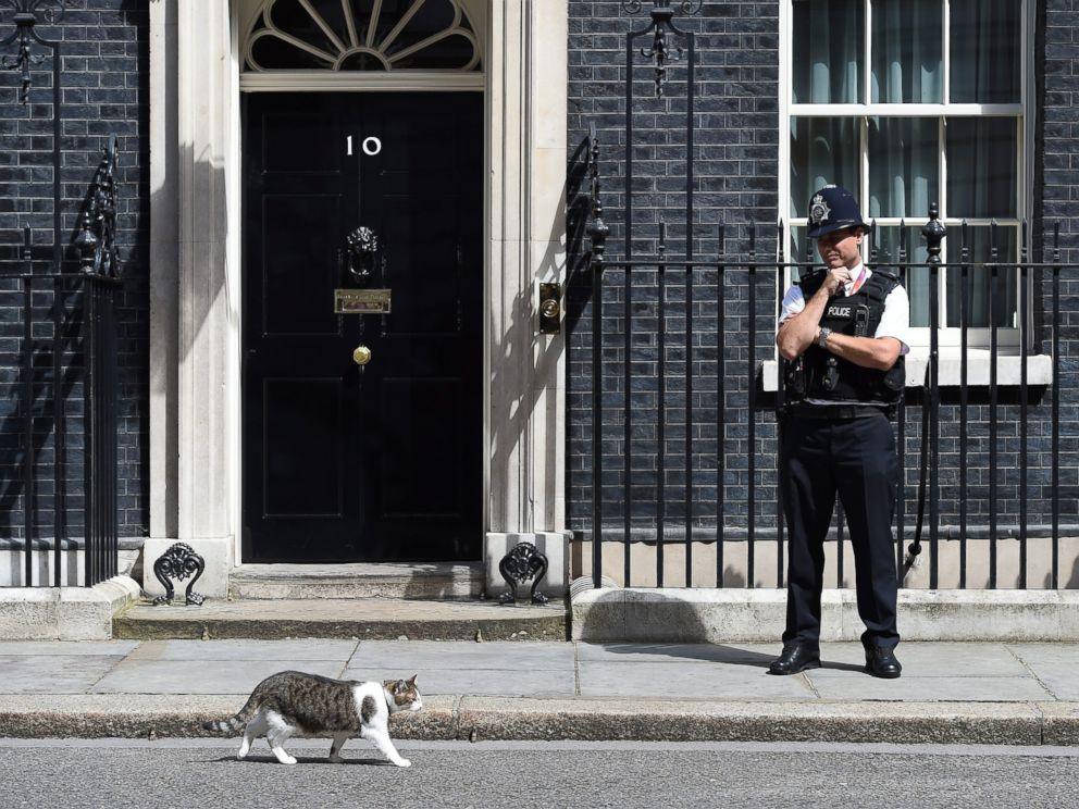 david cameron loves larry  cat  downing street     abc news