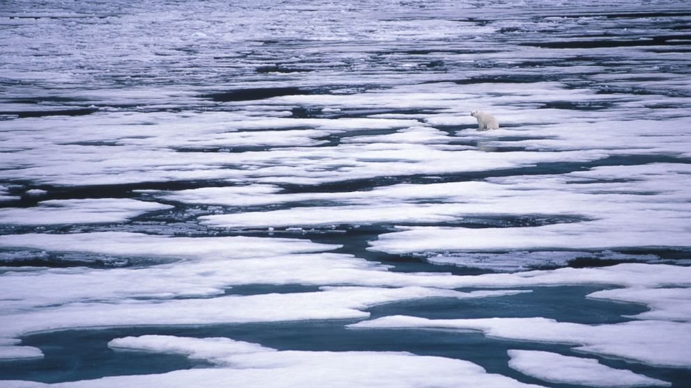 A polar bear sits on melting ice in the Artic sea in this undated stock photo.