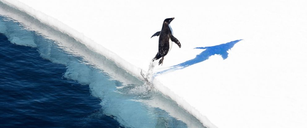 """PHOTO: An Adelie penguin jumps onto the ice in the Ross Sea in Antarctica. The worlds largest marine reserve aimed at protecting the pristine wilderness of Antarctica will be created after a """"momentous"""" agreement was finally reached, Oct. 28, 2016."""