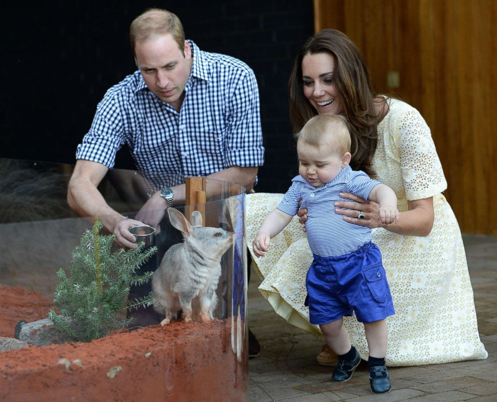 PHOTO: Prince William, Duke of Cambridge, Catherine, Duchess of Cambridge and Prince George of Cambridge meet a Bilby called George as they visit the Bilby Enclosure at Taronga Zoo on April 20, 2014 in Sydney.
