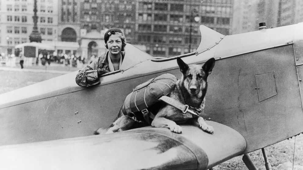 Parachutist dog seen here in this undated photo.