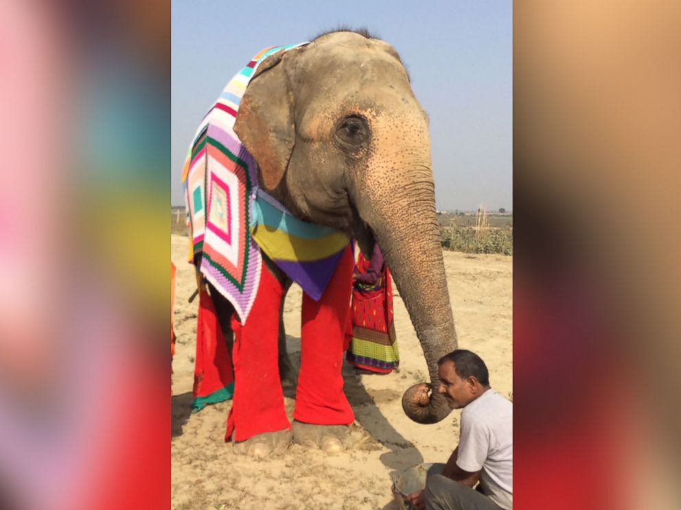 PHOTO: Wildlife SOS staff at the Elephant Conservation & Care Center in Mathura, India, created giant sweaters to keep the centers elephants warm during a cold spell in January 2017.