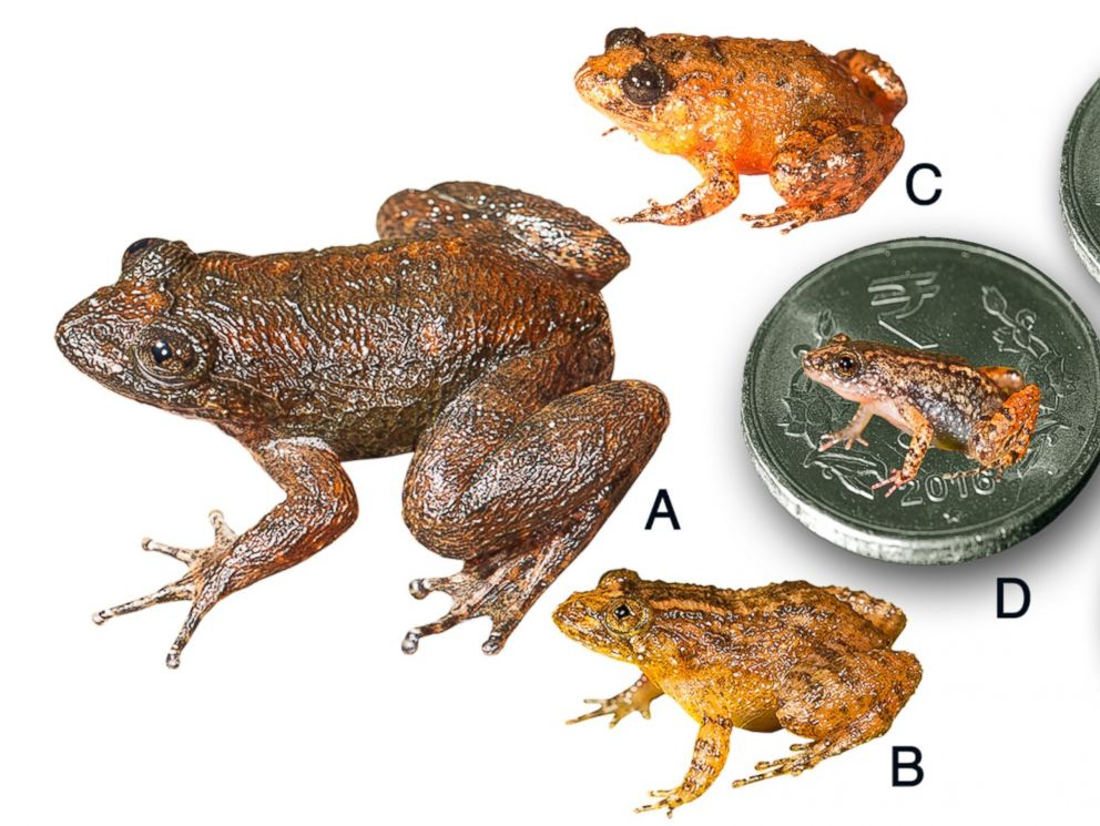 PHOTO: Seven new species discovered from the Western Ghats, India.