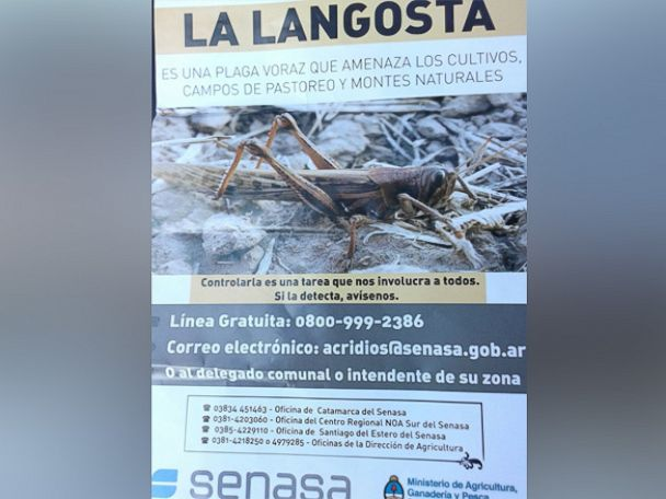 PHOTO: To combat against the locust infestation, SENASA, the government agricultural inspection agency, has created a hotline for people to call if they spot locusts in their area in this undated photo.