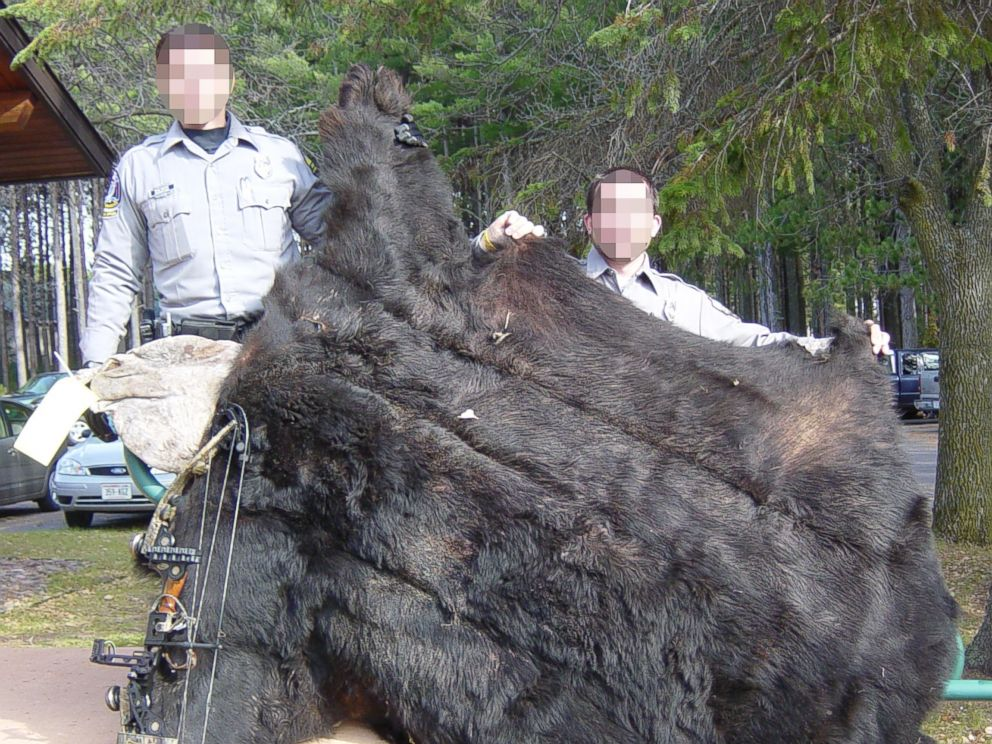 PHOTO: Wisconsin Department of Natural Resources wardens hold the remains of the black bear shot by Walter Palmer in this undated photo.