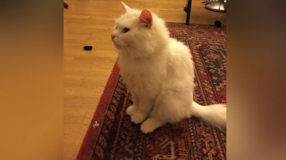 Dias the cat is seen in his foster home in Berlin in this undated photo.