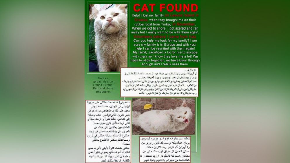 This translated flyer was created by volunteers to help spread the word about the lost cat.