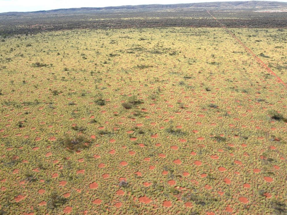 PHOTO: Australian fairy circles are seen here in this undated file photo.