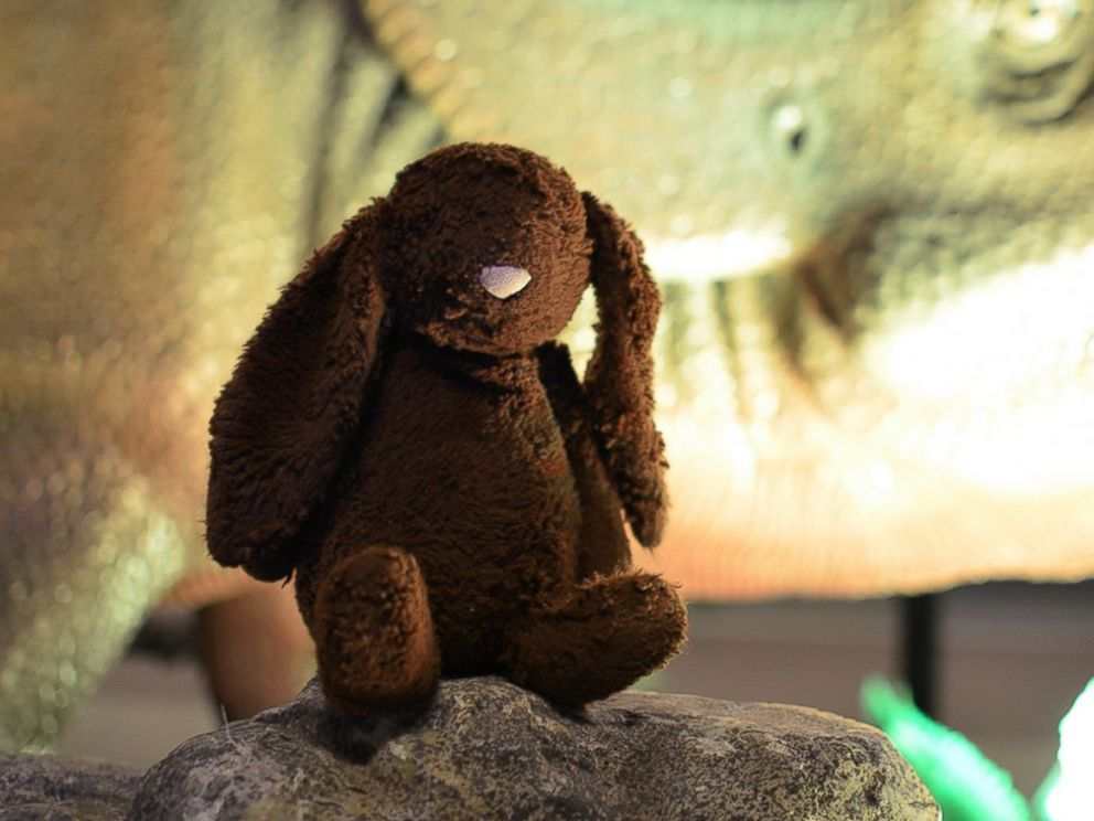 PHOTO: A brown, stuffed animal bunny that was left behind at the Nova Scotia Museum of Natural History in Canada, tours the museum.