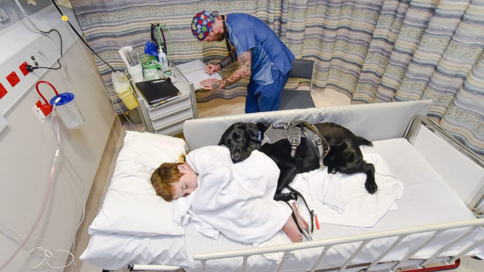 Mahe, an assistance dog, accompanied 9-year-old James Isaac at Wellington Children's Hospital in New Zealand, where he underwent an MRI scan to diagnose the cause of his seizures.