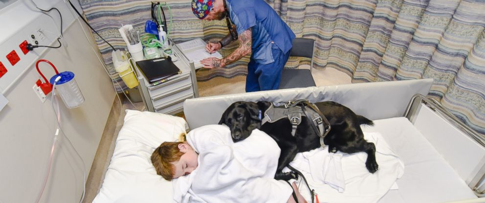 PHOTO: Mahe, an assistance dog, accompanied 9-year-old James Isaac at Wellington Childrens Hospital in New Zealand, where he underwent an MRI scan to diagnose the cause of his seizures.