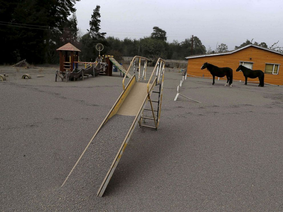 PHOTO: Horses are seen at a playground area covered with ash from Calbuco volcano at Ensenada town near Puerto Varas city April 23, 2015.