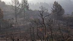 The burned landscape after a wildfire in Torre de l'Espanyol, near Tarragona, Spain, Thursday, June 27, 2019. The Catalonia region of Spain has seen its biggest forest fire this year, with more than 1,200 hectares (3,000 acres) believed to have been