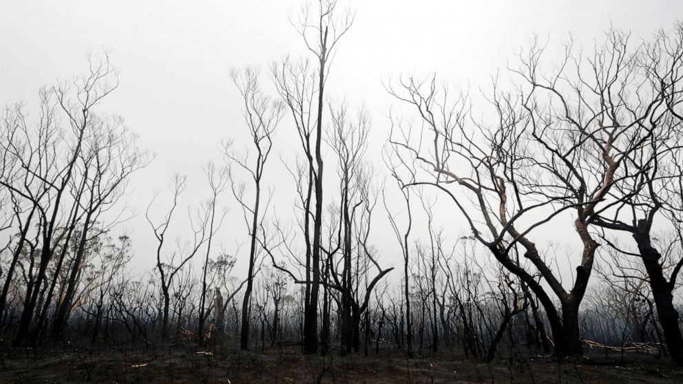 2 lebih hilang di Australia kebakaran hutan hujan membawa bantuan