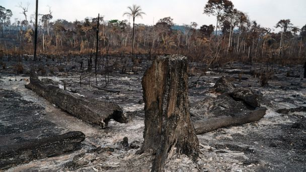 G-7 pledges funds to fight Amazon fires