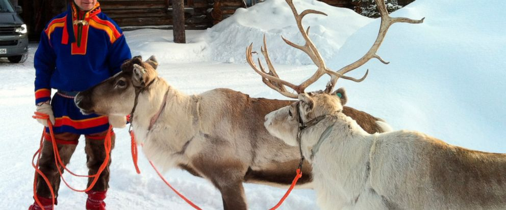 FILE - In this March 2013 file photo, A Sami handler in traditional clothing holds two of his reindeer herd in Saariselka, Finnish Lapland. The Finnish Defense Forces says 12 military conscripts ended up in the hospital after an armored personnel car