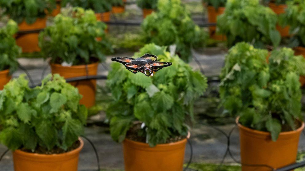 Drones vs moths: Dutch company tech solution to kill moths