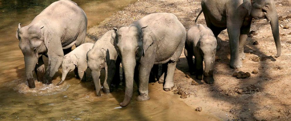 """FILE - In this Jan. 26, 2008, file photo released by Chinas Xinhua news agency, a group of wild elephants is seen in the """"Wild Elephant Valley"""" in the Dai Autonomous Prefecture of Xishuangbanna, southwest Chinas Yunnan Province. China plans to grow"""