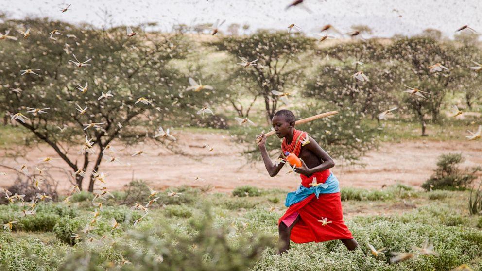 Heuschrecke Ausbruch, die meisten ernsthaft in 25 Jahren, trifft Ost-Afrika