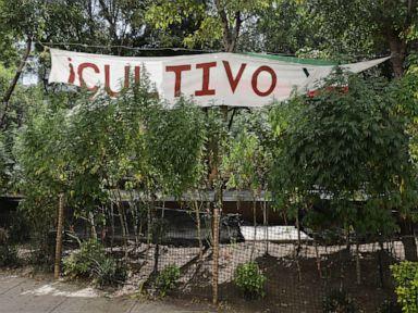 Anggota parlemen Meksiko mencapai faktur untuk melegalkan pot rekreasi thumbnail