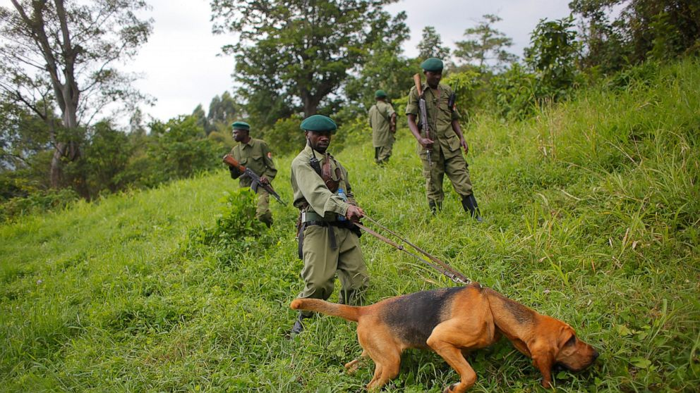 6 rangers killed in latest attack at Congo's Virunga park