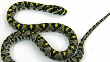 PHOTO: Snake found on Qantas airline flight