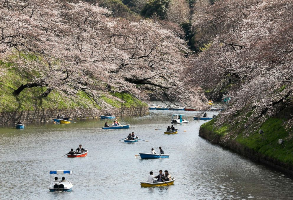 People row boats to view the cherry blossoms in bloom on Chidorigafuchi Moat in Tokyo, March 23, 2018.