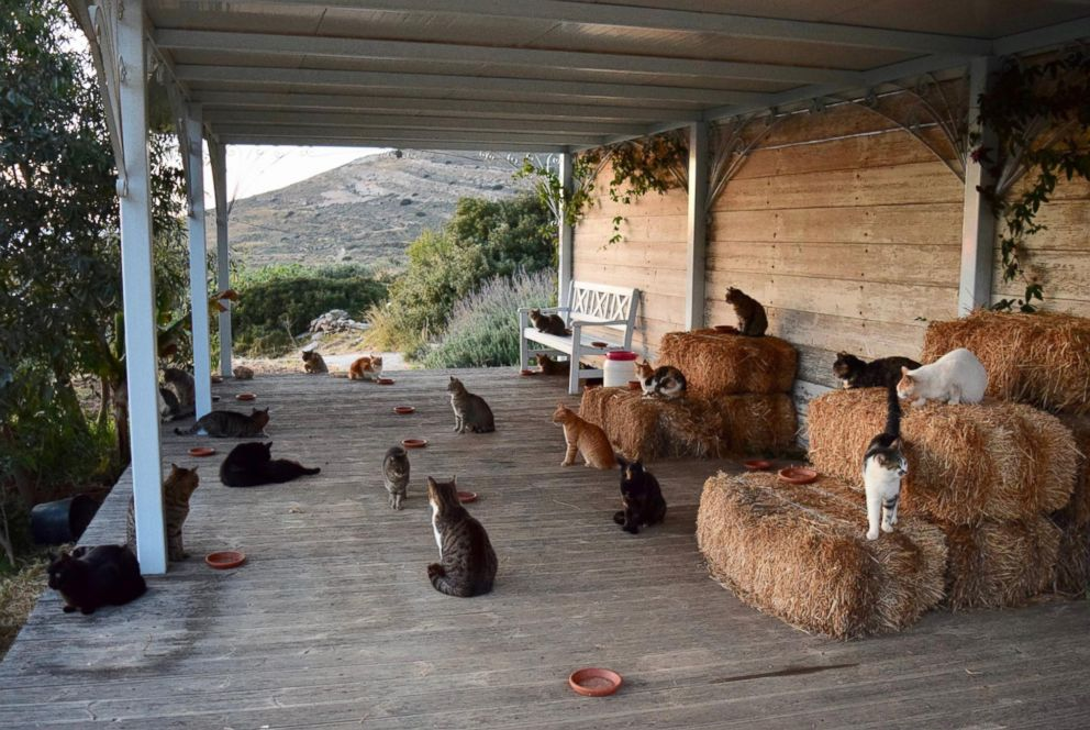 A cat sanctuary on the Greek island of Syros posted a job to live on the island in an all-expenses paid house and care for 55 cats.