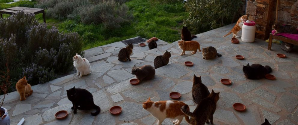 PHOTO: A cat sanctuary on the Greek island of Syros posted a job to live on the island in an all-expenses paid house and care for 55 cats.