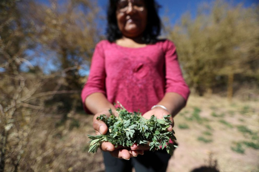 PHOTO: Former president of the Atacamenos Peoples Council, Ana Ramos, holds up a handful of alfalfa on a dried alfalfa field at Salar area next to San Pedro de Atacama, Chile, Aug. 15, 2018.