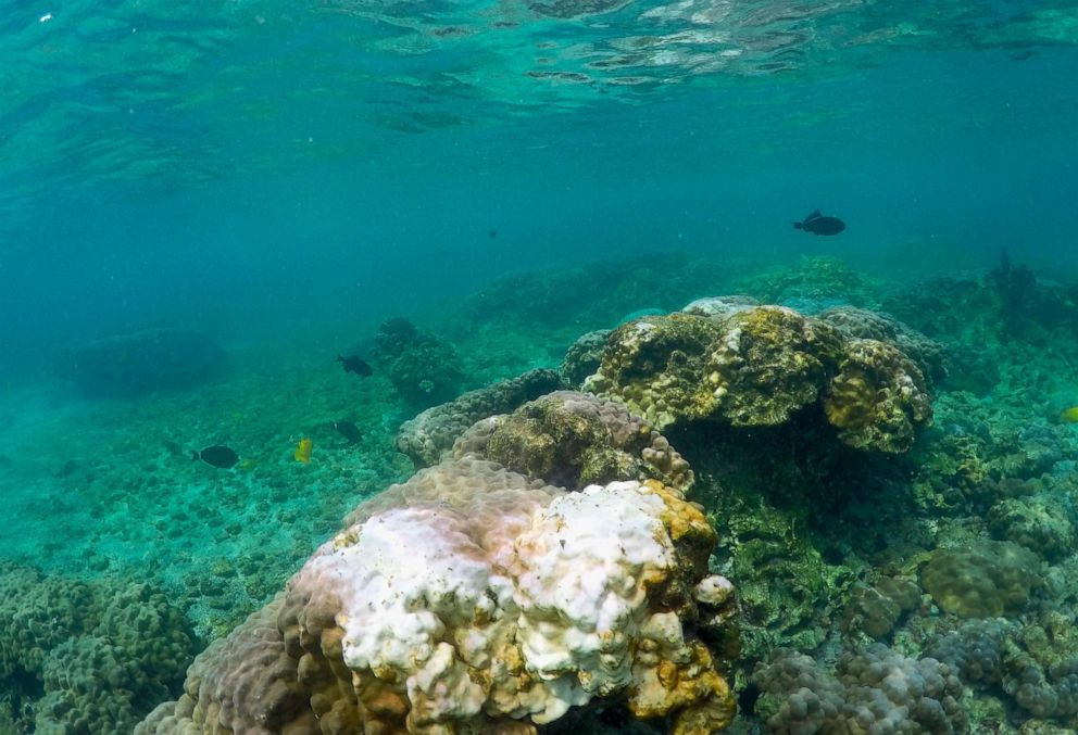 diet  weight loss  fat loss  diet solutions PHOTO: This Sept. 12, 2019, photo shows bleaching coral in Kahalau Bay in Kailua-Kona, Hawaii.