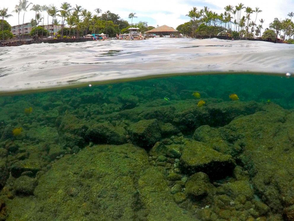 diet  weight loss  fat loss  diet solutions PHOTO: In this Sept. 12, 2019, photo, fish swim near bleaching coral in Kahalau Bay in Kailua-Kona, Hawaii.