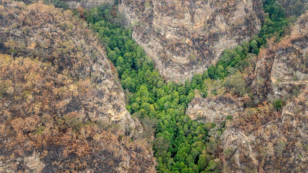 'Dinosaurier' - Bäume in Australien gespeichert von Waldbränden in geheimer mission